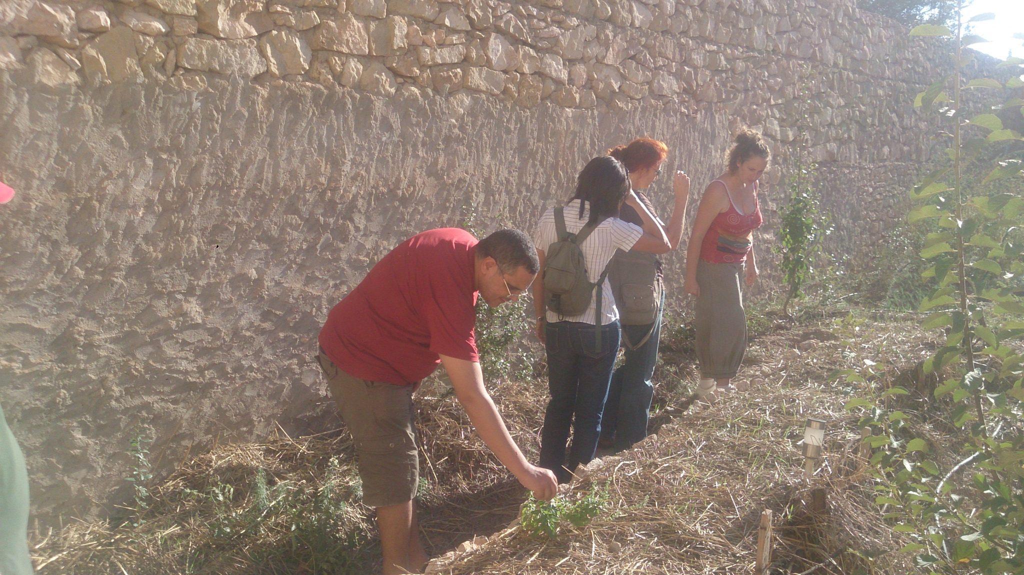 Activité pratique au jardin stage de permaculture Tunisie