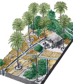 Cultures étagées dans les oasis Permaculture Tunisie