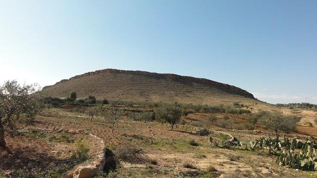 Boomerang en pierre autour de chaque arbre dans un verger en pente en Tunisie