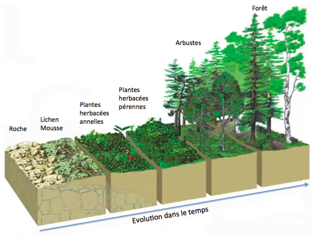 Succession écologique, Patterns permaculture