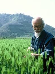 Massanobu Fukuoka et son agriculture naturelle, inspiration de la permaculture