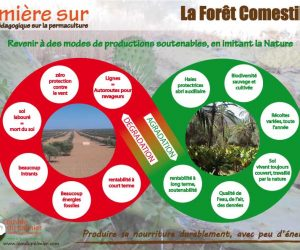 Affiche permaculture food forest
