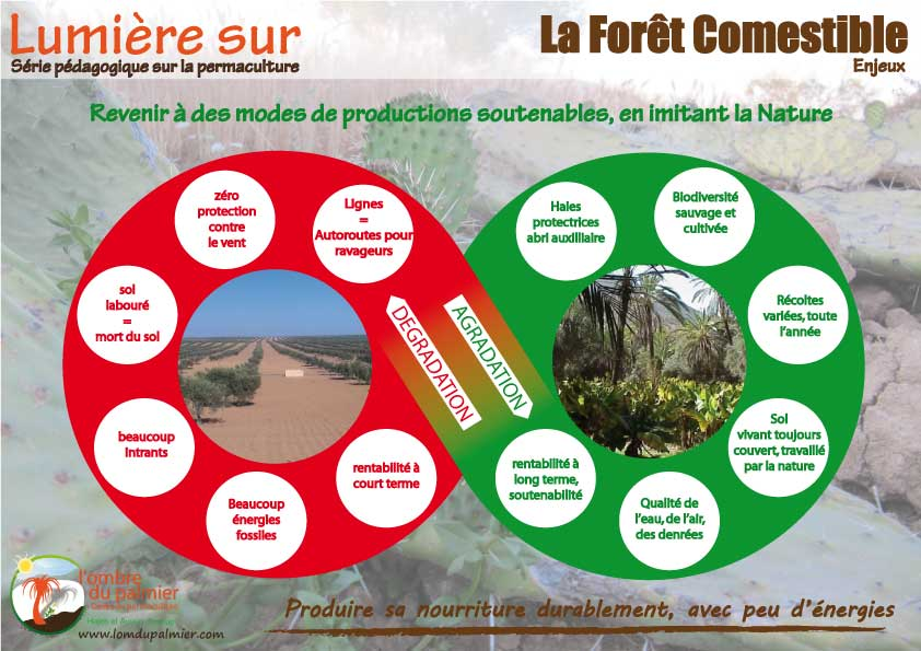 Food forest poster affiche