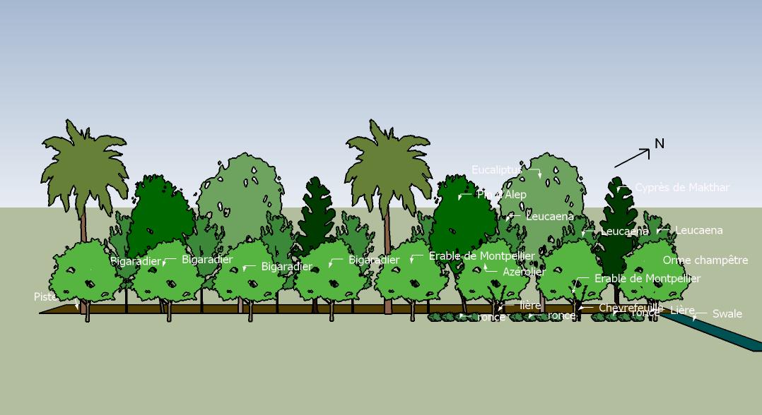 Plantes pour la haie Sud-Est de la Food Forest de L'ombre du palmier, Tunisie