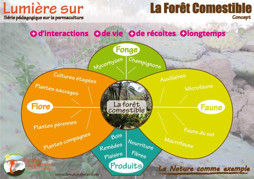 Affiche permaculture foret comestible
