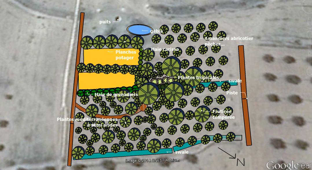Design Food forest de L'ombre du palmier, centre de permaculture en Tunisie