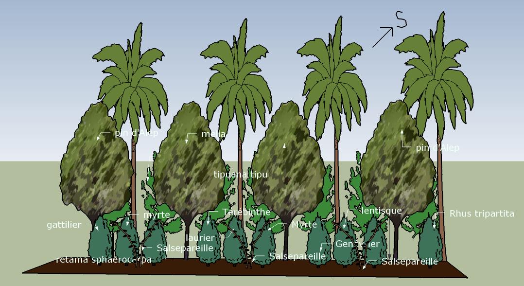 Plantes pour la haie clôture et brise-vent Sud Est de la foode forest à L'ombre du palmier, Tunisie