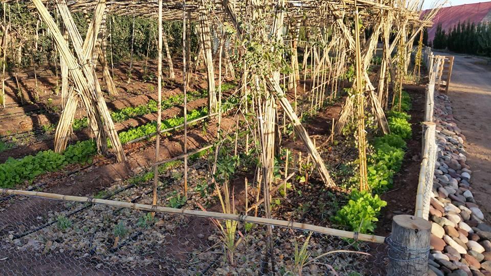 potager aride Tunisie