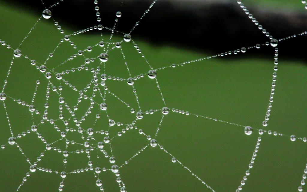 Toile d'araignée, pattern du réseau