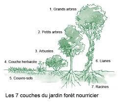 Forêt nourricière food forest tunisie