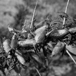 Travailler avec la nature permaculture l'ombre du palmier