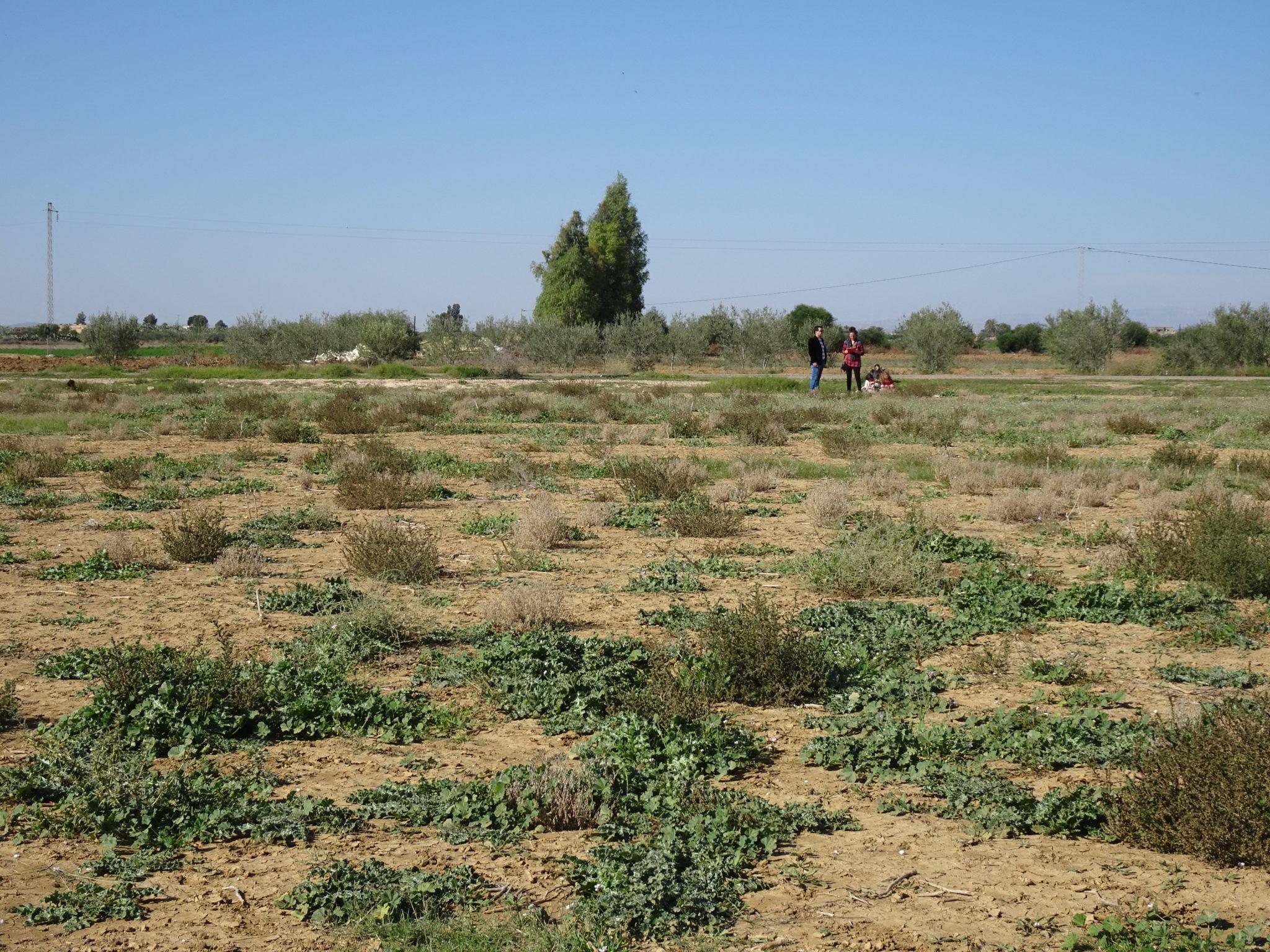 Projet Sidi Bouzid